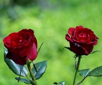 rosen_336_280